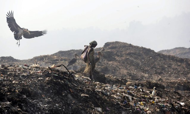 A Greater Adjutant Stork flies by a ragpicker looking for recyclable items at a garbage dump on Earth Day, on the outskirts of Gauhati, India, Tuesday, April 22, 2014. People across the globe hold events to celebrate the Earth's environment and spread awareness on how to conserve its natural resources on Earth Day, observed annually on April 22. (Photo by Anupam Nath/AP Photo)
