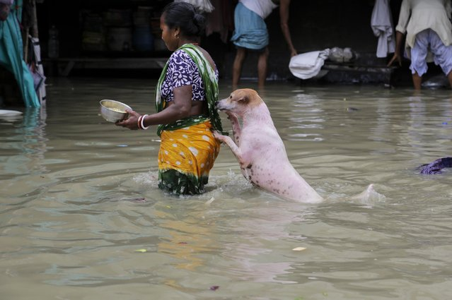A stray dog takes the support of a woman to cross a flooded street in Kolkata, India, Sunday, Aug. 2, 2015. (Photo by Bikas Das/AP Photo)
