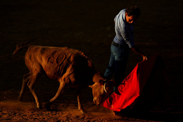 "Spanish bullfighter Rafael Tejada performs a pass to a heifer during a ""tentadero"" (a small bullfight to check the bravery of heifers which are not killed) at Reservatauro Ronda cattle ranch in Ronda, near Malaga, southern Spain August 9, 2017. (Photo by Jon Nazca/Reuters)"