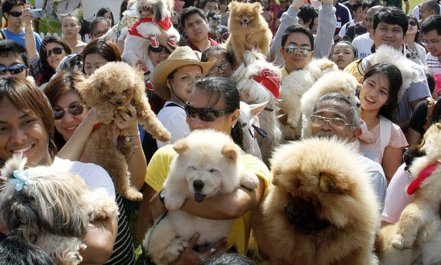 Dog owners hold up their pets to be blessed before a dog fashion show advocating animal rights in Quezon City in Metro Manila August 26,2012. (Photo by Cheryl Ravelo/Reuters)