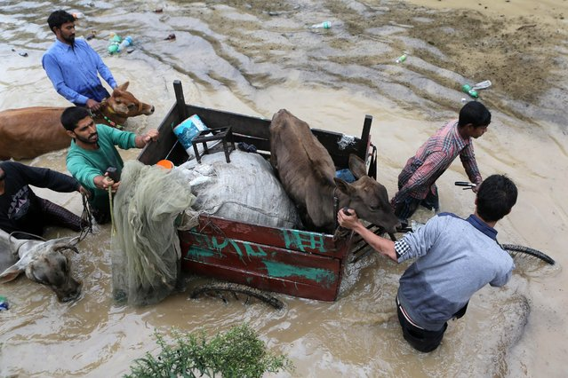 Kashmiri men move with their cattle towards safer area in Srinagar, India, Saturday, September 6, 2014. (Photo by Dar Yasin/AP Photo)