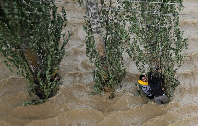 Kashmiris hang on to a tree to prevent being swept away by floodwaters in Srinagar, India, Tuesday, September 9, 2014. The death toll from floods in Pakistan and India reached 400 on Tuesday and have put more than half a million people in peril and rendered thousands homeless in the two neighboring states. (Photo by Dar Yasin/AP Photo)