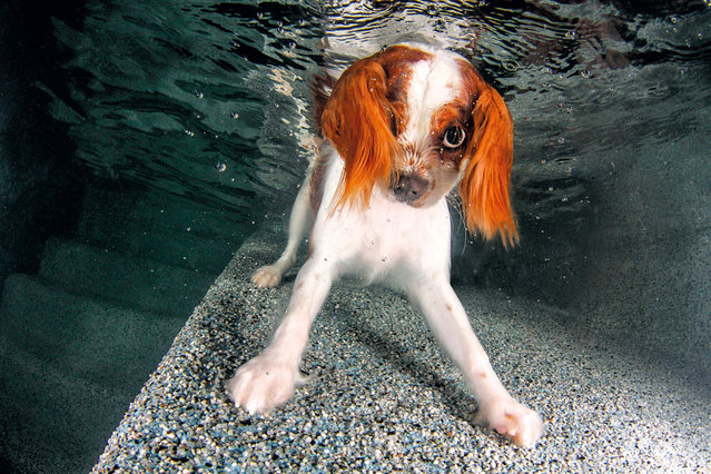 """Underwater Puppies"": Monty. (Photo by Seth Casteel)"