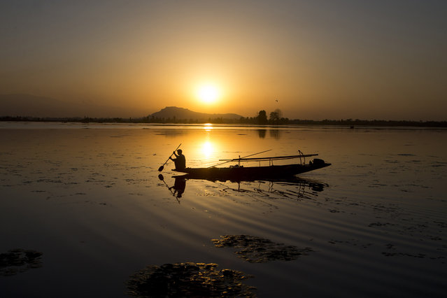 A Kashmiri fisherman rows his Shikara, or traditional boat, during sunset at the Dal Lake in Srinagar, Indian controlled Kashmir, Saturday, August 29, 2015. (Photo by Dar Yasin/AP Photo)