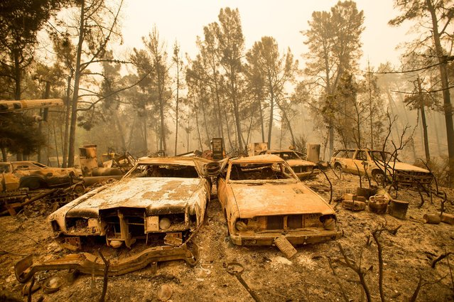 Vintage cars line a property after the Loma fire burned through Loma Chiquita Road near Morgan Hill, Calif., on Wednesday, September 28, 2016. A heat wave stifling drought-stricken California has worsened a wildfire that burned some buildings and forced people from their homes. (Photo by Noah Berger/AP Photo)