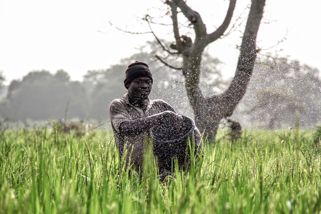 Farmer spreading fertiliser on his rice crop, northern Ghana. By Anais Voski, finalist: action. (Photo by Anais Voski/UK National Geographic Traveller Photography Competition 2018)