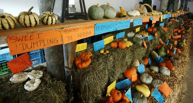 Various kinds of pumpkins, out of some 400 grown this season, are seen displayed in a barn at Franzlbauer farm in Hintersdorf, Austria, October 27, 2015. (Photo by Heinz-Peter Bader/Reuters)