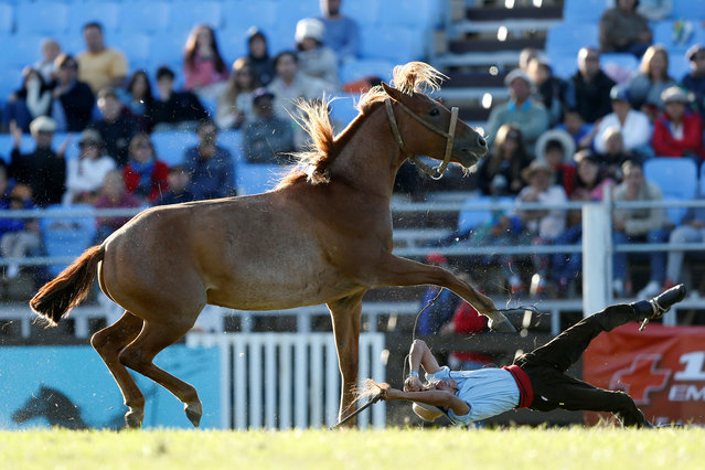 A gaucho is unseated by an untamed horse during the Creole week celebrations in Montevideo, Uruguay on March 27, 2018. (Photo by Andres Stapff/Reuters)