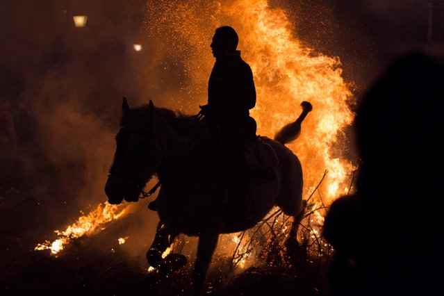 A man rides a horse through a bonfire as part of a ritual in honor of Saint Anthony the Abbot, the patron saint of domestic animals, in San Bartolome de Pinares, about 100 kilometers (62 miles) west of Madrid, Spain on Friday, January 16, 2015. (Photo by Andres Kudacki/AP Photo)
