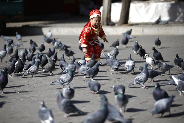 A boy, in a transitional costume, plays with pigeons at Ditan Park, also known as the Temple of Earth, in Beijing, February 16, 2015. (Photo by Kim Kyung-Hoon/Reuters)
