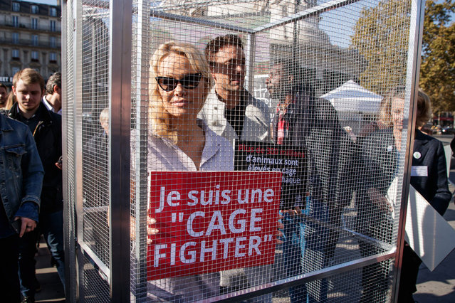 """US-Canadian actress Pamela Anderson (L) and TV show partner the French dancer Maxime Deremez (R) poses for photographs inside a cage as they participate in a demonstration against caged farming named """"End of Cage Age"""" organised by international NGO, Compassion in World Farming (CIWF) in Paris, France, 10 October 2018. Anderson is in France to take part in the French version of the TV show """"Dancing with the Stars"""". (Photo by Christophe Petit Tesson/EPA/EFE)"""