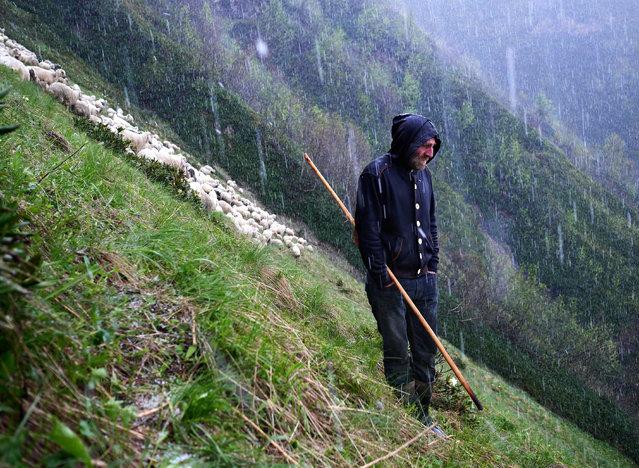 A shepherd in Georgia's Tusheti mountains on May 28, 2018. (Photo by Amos Chapple/Radio Free Europe/Radio Liberty)