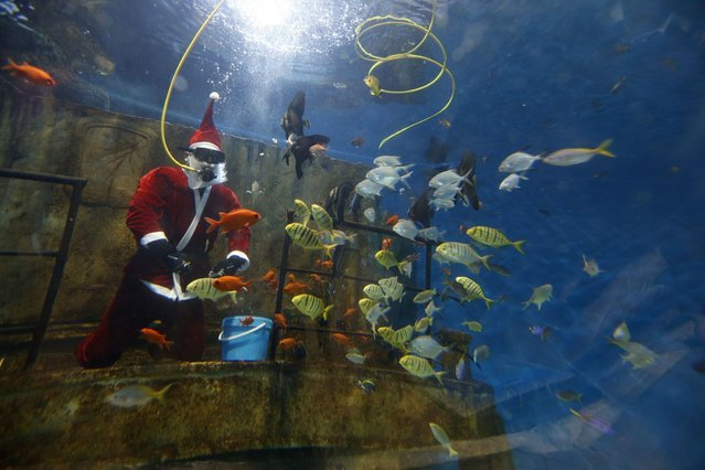 Diver dressed as Santa Claus feeds fish inside a fish tank at the Malta National Aquarium in Qawra, outside Valletta. (Photo by Darrin Zammit Lupi/Reuters)