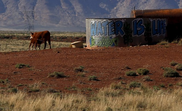 "Cattle gather near a water tank painted with the words ""Water is Life"" outside Grand Canyon National Park in northern Arizona, April 13, 2015. (Photo by Jim Urquhart/Reuters)"