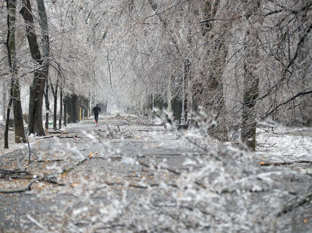 A man jogs along a path with ice covered fallen tree branches in Bucharest, Romania, Saturday, January 26, 2019. Severe weather conditions has settled on much of the region with freezing rain disrupting roads and air traffic. (Photo by Vadim Ghirda/AP Photo)