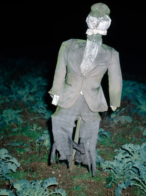 """The English poet Walter de la Mare tells of a scarecrow that frightened both crows and men: ""The way it bore itself up was more than you would expect from sticks and rags"". The vile apparition turned out to be the ghost of a man who took possession of the scarecrow to gain his revenge on a rival"". (Photo by Colin Garratt)"