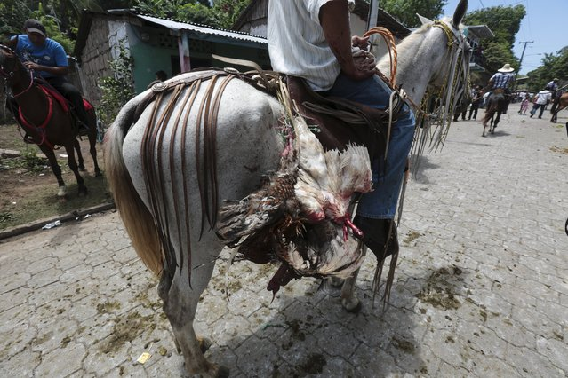 A decapitated rooster is pictured after a rooster run, during celebrations in honour of San Juan Bautista in San Juan de Oriente town, Nicaragua, June 26, 2015. (Photo by Oswaldo Rivas/Reuters)