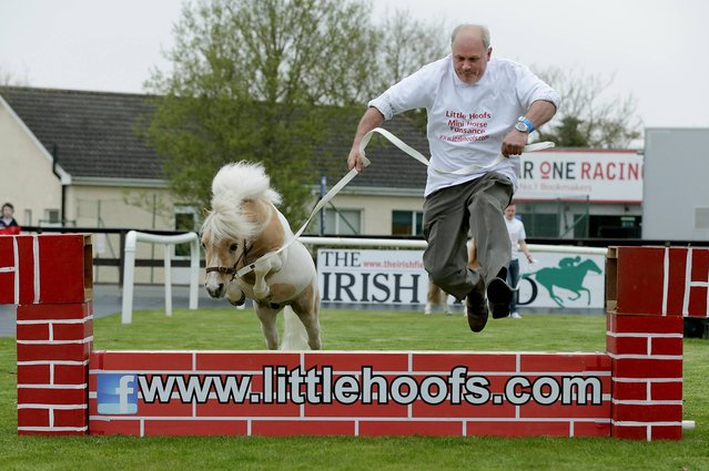 Hugh Deegan clears the wall with Sun Prince during a demonstration of Falabella horses at Fairyhouse Racing, on April 20, 2014. (Photo by Morgan Treacy/Inpho Sports Photography Ireland)