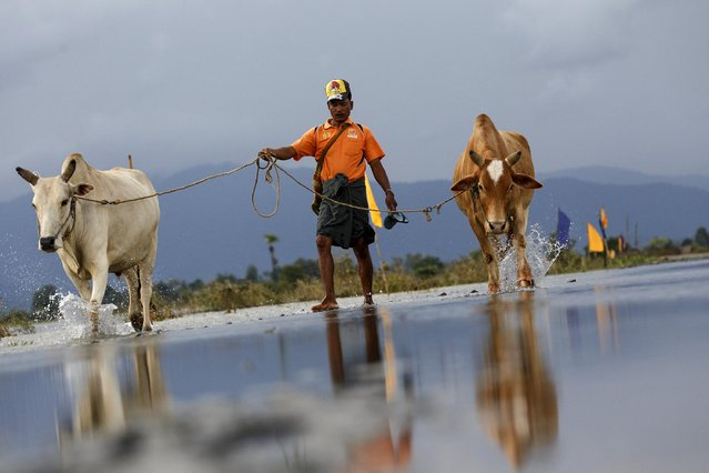 A man pulls his oxen as he walks on a flooded road at Kawlin township, Sagaing division, Myanmar July 23, 2015. Heavy rains caused flooding over 20,000 acres of rice field and in about a hundred villages, killing at least eight people, according to local media. (Photo by Soe Zeya Tun/Reuters)