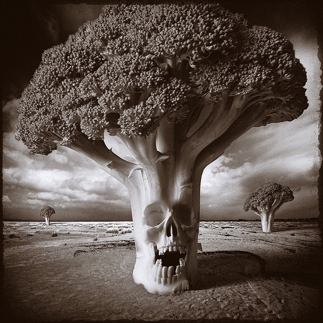 Once I met the King of the Broccolis. Photo Art by Yves Lecoq