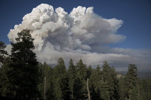 "Smoke plumes rise from the so-called ""Rough Fire"" in the Sierra National Forest, California, August 20, 2015. In California, suffering its worst drought on record, about 2,500 people were forced to flee Christian camps east of Fresno at Hume Lake as the so-called Rough Fire crossed Highway 180, officials said. (Photo by Max Whittaker/Reuters)"