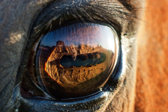 Picture taken on August 20, 2014 shows the eye of a horse seen in the light of the rising sun in Sehnde near Hanover, central Germany. (Photo by Julian Stratenschulte/AFP Photo/DPA)