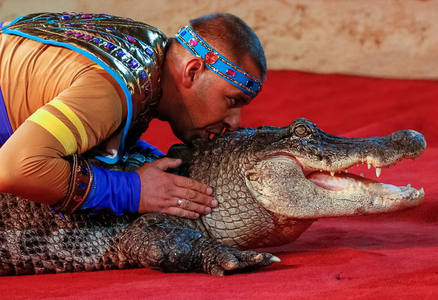 """A crocodile and its tamer perform during the presentation of the new show """"The extreme arena"""" at the National Circus in Kiev, Ukraine, September 15, 2016. (Photo by Gleb Garanich/Reuters)"""