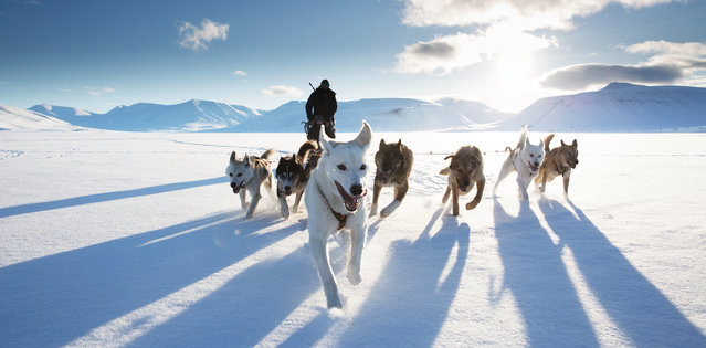 """Dog sledding, Svalbard, Norway. By Stuart Dunn, winner: action. An epic, icy shot, taken from a snowmobile. Judges comments included: """"More than just a fast shutter speed is needed here – great action photographs plunge you into the experience"""". (Photo by Stuart Dunn/UK National Geographic Traveller Photography Competition 2018)"""