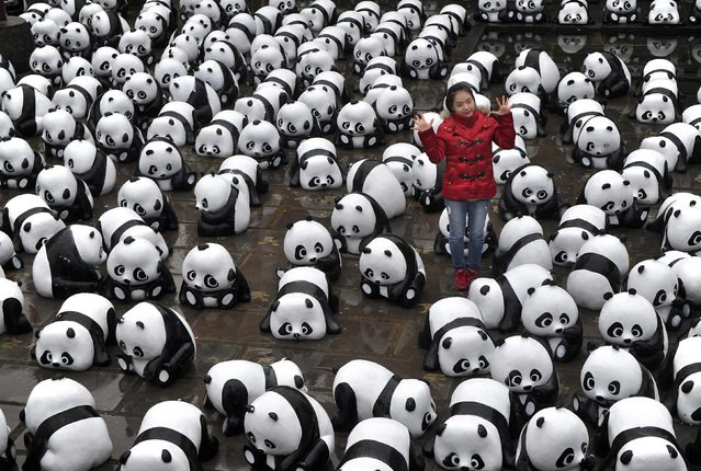 A woman poses for pictures among panda installations during an exhibition in Hefei, Anhui province, December 10, 2014. (Photo by Reuters/Stringer)