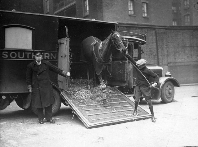 M R Griegson's racehorse Buck of Berks arrives at King's Cross Station in London for transportation to Lincoln, where he will take part in the Lincolnshire Handicap, 16th March 1937. (Photo by David Savill/Topical Press Agency/Getty Images)