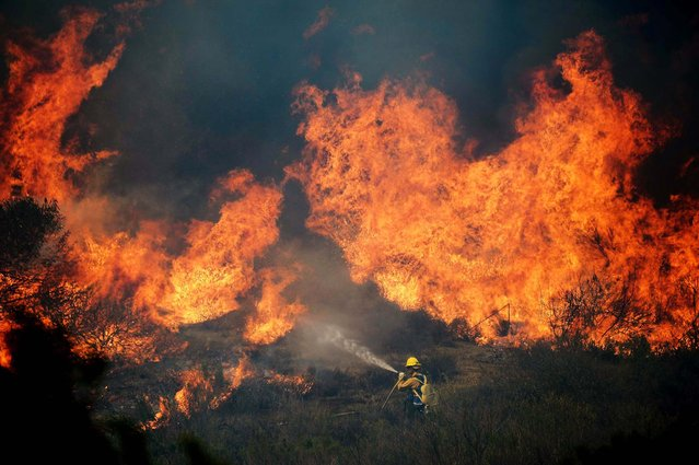 A US Forestry fire fighter confronts an out of control wildfire  in Camarillo on Thursday. (Photo by Kevork Djansezian/Getty Images)