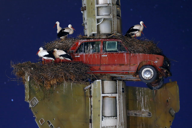 Stork art by Francisco Mingorance. Finalist, Urban Wildlife. White storks nesting on a sculpture outside the Vostell-Malpartida Museum near Cáceres in Spain. (Photo by Francisco Mingorance/Wildlife Photographer of the Year 2015)
