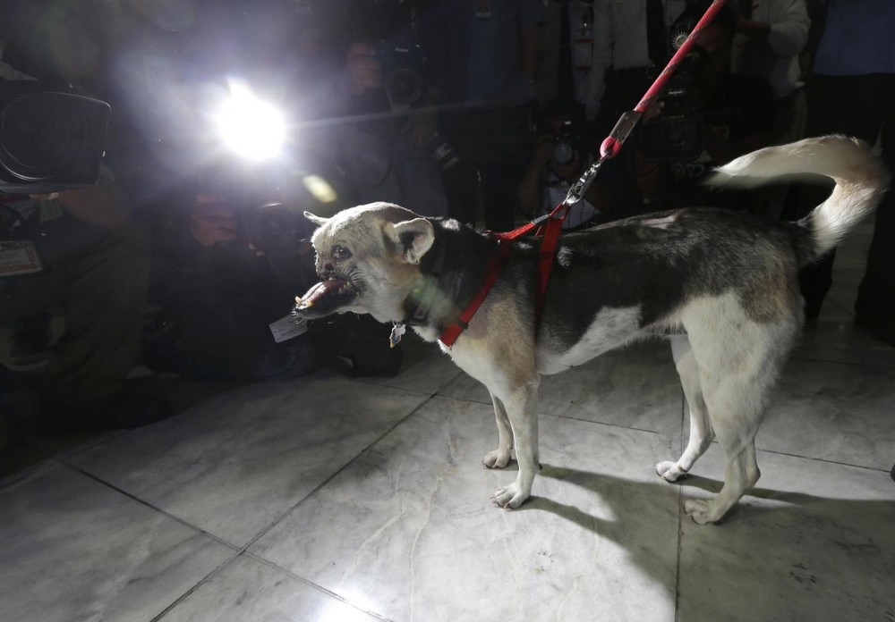 Philippines Dog Kabang Returns Home After Face Surgery