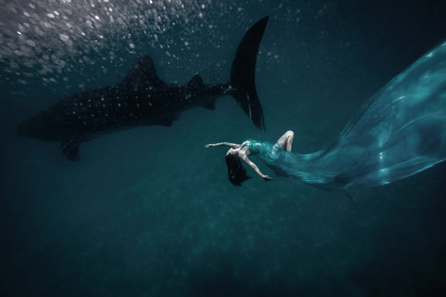 Jennifer Tse with a whale shark in The Philippines. (Photo by Sean Lee-Davies/Caters News)