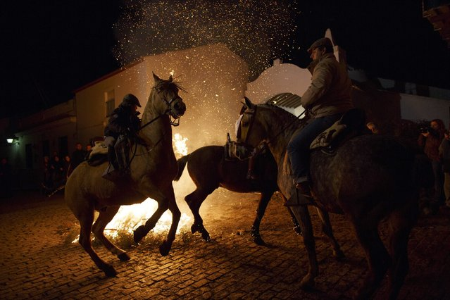 "People ride through the flames on horses during the ""Luminarias"" annual religious celebration on the eve of Saint Anthony's Day in the village of Alosno, southwest Spain, January 16, 2015. (Photo by Marcelo del Pozo/Reuters)"
