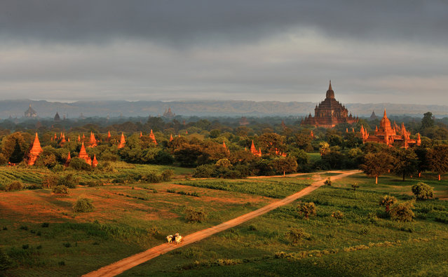 """Time and Tide"". Early in the morning, soft sunshine spills over the earth of Bagan as well as its Buddhist temple, which guards the villagers from age to age. (Photo was taken in December 2012). Location: Bagan Myanmar. (Photo and caption by Feng Xue/National Geographic Traveler Photo Contest)"