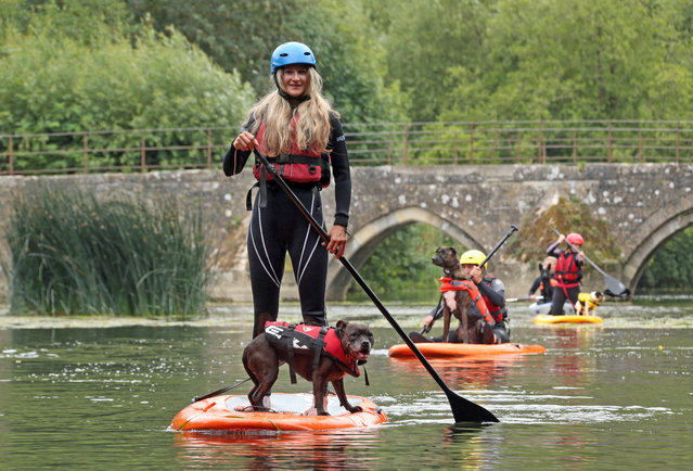 Forget doggy paddle because some dogs have been trying out doggy paddleboarding on a British river. The canines have been trying out the fast growing hobby on the River Avon, United Kingdom on August 20, 2018 which is aimed at building trust between pet and owner. (Photo by Jason Bryant/Apex News)