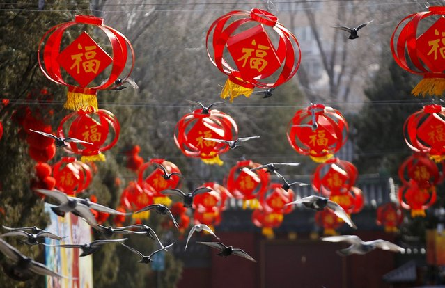 Pigeons fly in front of red paper lanterns, in place for the upcoming Chinese Lunar New Year, at Ditan Park, also known as the Temple of Earth, in Beijing, February 16, 2015. (Photo by Kim Kyung-Hoon/Reuters)