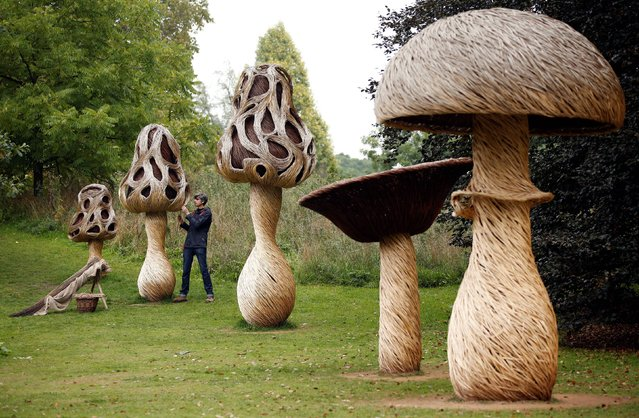 """Artist Tom Hare constructs giant mushrooms from woven willow as part of an installation called """"Fungi Fairy Ring"""" during a photocall to launch Kew Gardens' """"Incredibles"""" season, on October 2, 2013. (Photo by Jonathan Brady/PA Wire)"""