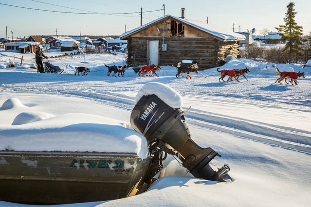 Joar Liefseth Ulsom leaves the Kaltag, Alaska, checkpoint during the Iditarod Trail Sled Dog Race, Sunday, March 15, 2015. (Photo by Loren Holmes/AP Photo/Alaska Dispatch News)