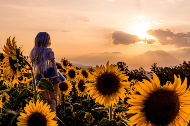"""""""The end of summer"""". Akeno Sunflower Festival 2013, Japan. (Photo and caption by AZURE)"""