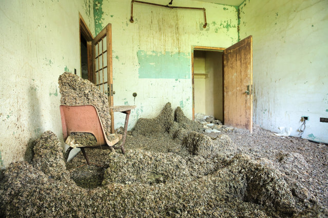 In Queens, a population of pigeons has inhabited an abandoned ward at Creedmoor State Hospital  for decades. Dropping stalagmites accrue under popular roosts on the top floor. (Photo by Will Ellis)