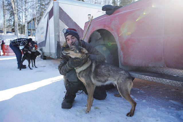 A helper with Noah Burmeister's team visits with a dog before the restart of the Iditarod Trail Sled Dog Race in Willow, Alaska March 6, 2016. (Photo by Nathaniel Wilder/Reuters)