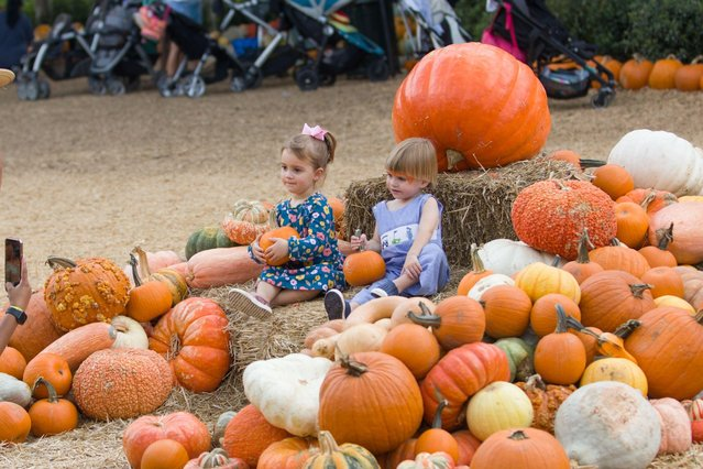 """Children are seen among pumpkins at Arboretum's Pumpkin Village in Dallas, Texas, the United States, September 28, 2021. The Pumpkin Village returns to Dallas Arboretum with more than 90,000 pumpkins, gourds and squash. This year's theme is """"Bugtopia"""". (Photo by Xinhua News Agency/Rex Features/Shutterstock)"""