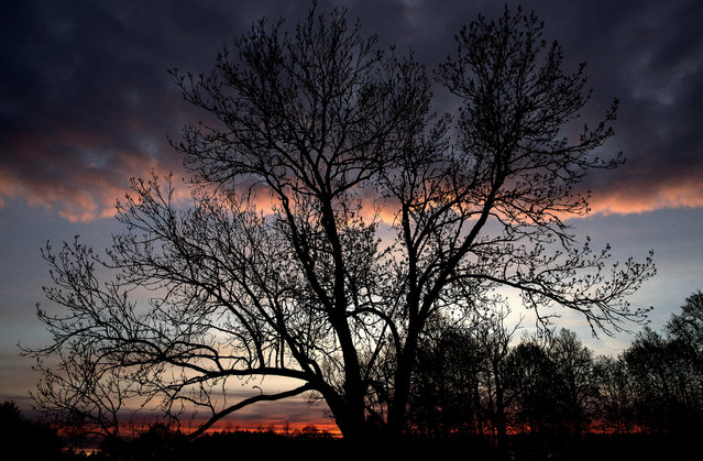 The sun sets behind trees in Ignalina region, some 106 km (66 miles) north of the capital Vilnius, Lithuania, Sunday, May 5, 2019. (Photo by Mindaugas Kulbis/AP Photo)