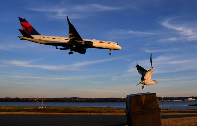 As an airliner prepares to land, a bird takes off at the Gravelly Point park near Reagan National Airport in Arlington, Va. on December 23, 2018. (Photo by Michael S. Williamson/The Washington Post)