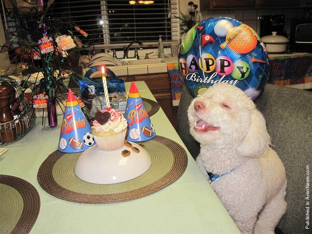 Riley celebrates his second birthday at a party thrown by his owner Maureen Ravelo