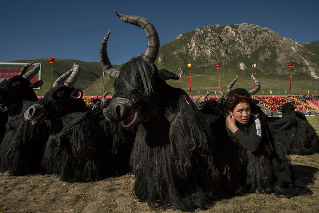Ethnic Tibetans dressed  in Yak costumes wait to perform on July 24, 2015 at a local government sponsored festival on the Tibetan Plateau in Yushu County, Qinghai, China. (Photo by Kevin Frayer/Getty Images)