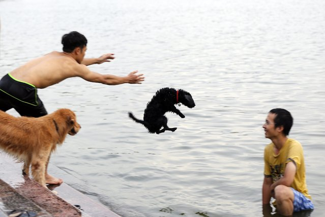 A men teach a dog to swim at West Lake in Hanoi, Vietnam, 18 August 2014. Vietnam's pet industry is booming – more dog trainers and groomers are opening across the country, with some online dog clubs attracting thousands of members. (Photo by Luong Thai Linh/EPA)