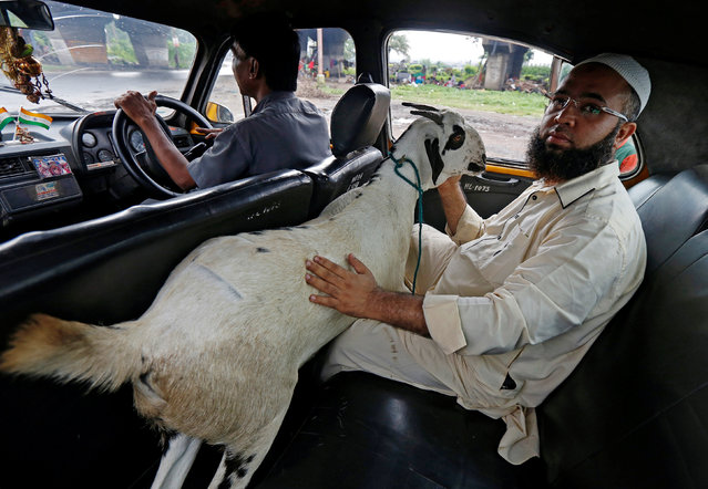 A man sits in the back of a taxi with a goat after purchasing it from a livestock market ahead of the Eid al-Adha festival in Kolkata, India, September 8, 2016. (Photo by Rupak De Chowdhuri/Reuters)